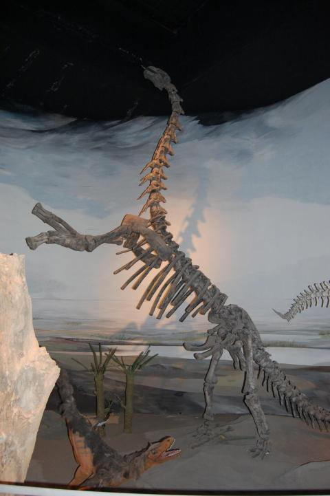 John R. Hutchinson ‏@JohnRHutchinson  7m @MikeTaylor Abundant in the Egidio Feruglio museum in Trelew, Argentina-- almost all their sauropods are rearing