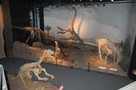 John R. Hutchinson ‏@JohnRHutchinson @MikeTaylor Here's the wide view of that exhibit, with about-to-be-squished abelisaur and sulking Amargasaurus: