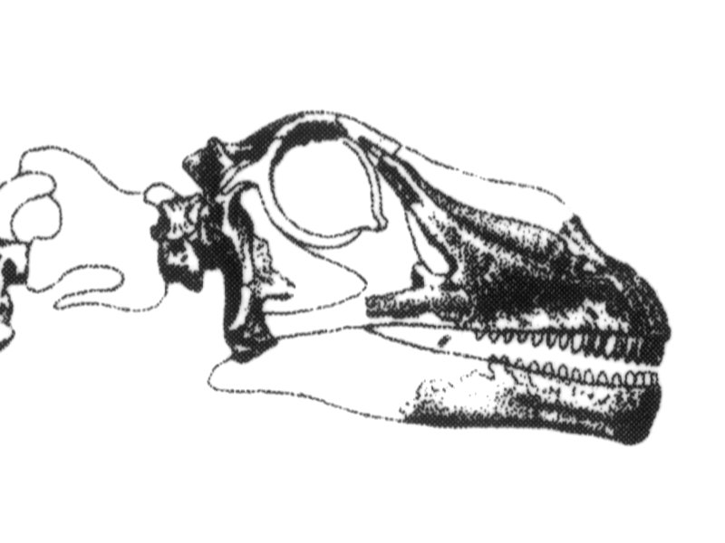 Marsh1891-plateXVI-Apatosaurus-skull
