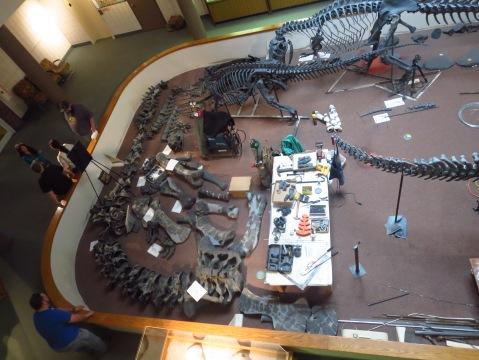 1 - CEU Prehistoric Museum