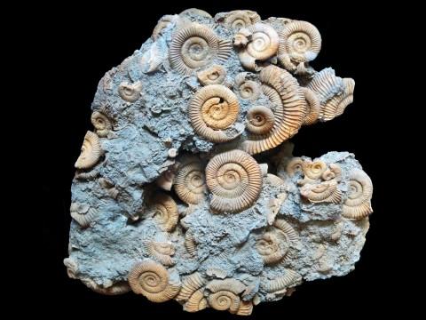 Ammonite display at Dinosaur Journey