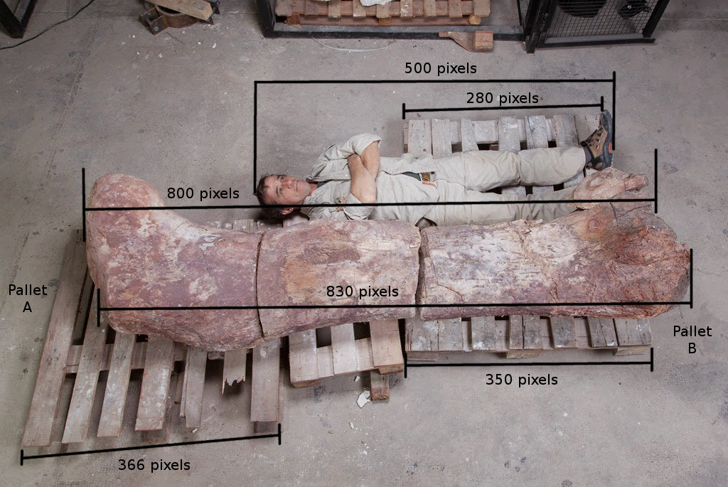 How Long Is A Meter : The new argentine titanosaur was about same size as