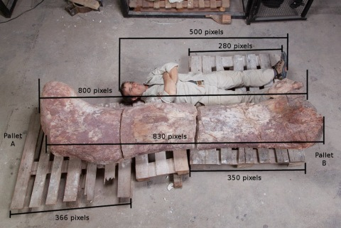 femur_pablo with measurements
