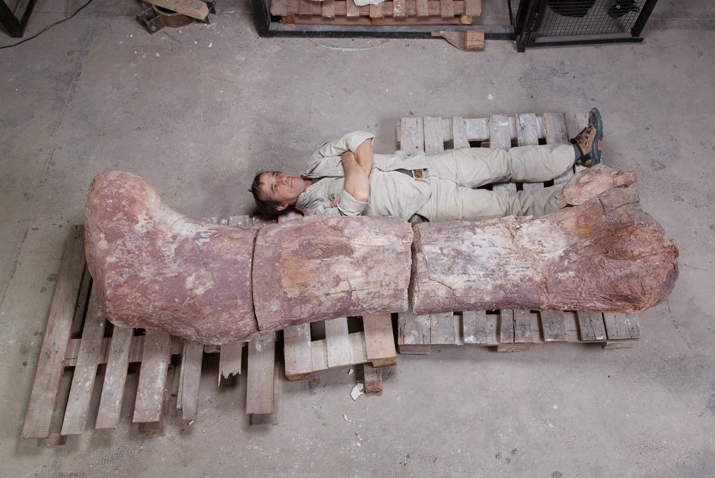 The new Argentine titanosaur was about the same size as ...