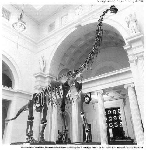 Glut1997-p215--brachiosaurus-altithorax-mount