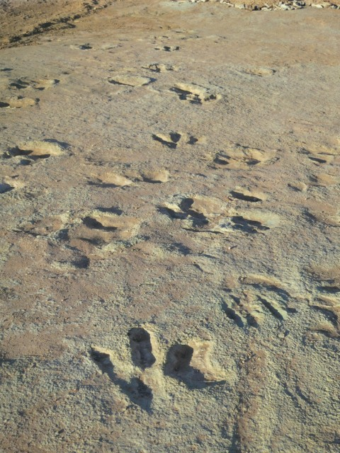 Mill Canyon large theropod trackway - 1200
