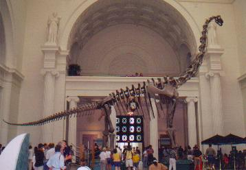 The Brachiosaurus mount in its original position in the main hall of the Field Museum. I can't find a higher resolution version of this photo -- can anyone help?