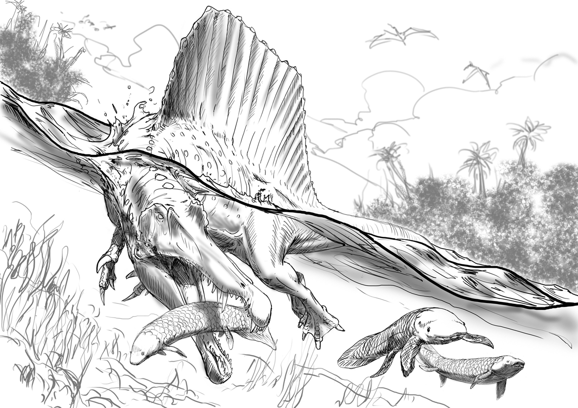 Guest post the genesis of davide bonadonna s spinosaurus for Carcharodontosaurus coloring page