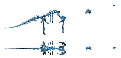Dreadnoughtus 3D skeleton orthogonal views