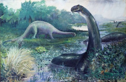"Figure 1: Charles R. Knight's famous 1897 painting of sauropods, which were then considered amphibious. In the foreground, Apatosaurus (""Brontosaurus"" of his usage) wades in a lake, its neck erect. In the background, Diplodocus wanders on the shore, its neck held low and horizontal. These differences in posture may not represent different perceptions of the habitual behaviour of these different taxa, merely the postures these individuals happened to adopt at a particular moment."