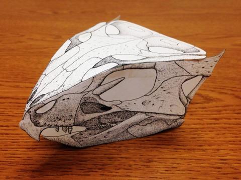 Aquilops paper skull assembled