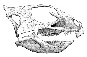 Aquilops skull lateral 5 - penultimate version