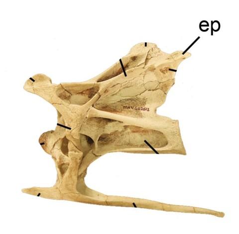 NIgersaurus cervical - Sereno et al 2007 fig 3