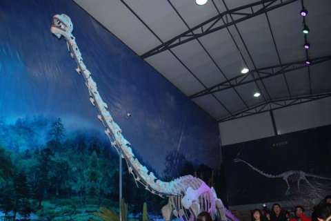 A reconstructed skeleton of Qijianglong now on display in Qijiang Museum