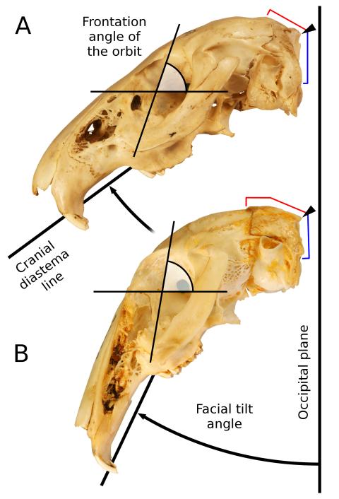 Kraatz et al 2015 Figure 2 - facial tilt