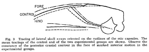 Skull deformation in bipedal rats - Moss 1961 fig 3