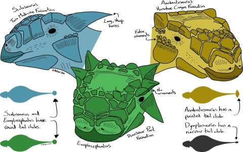 ankylosaur heads by Victoria Arbour