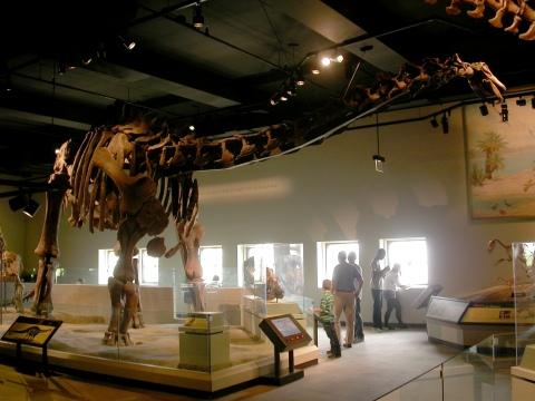FMNH 25112 formerly Apatosaurus