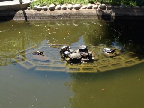 Peggy Sue's Diner-saurs - turtles
