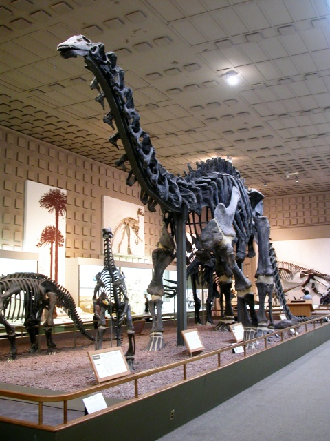 Brontosaurus, the animal formerly known as Apatosaurus, the animal formerly known as Brontosaurus.