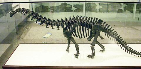 AMNH 460 skeleton model 2