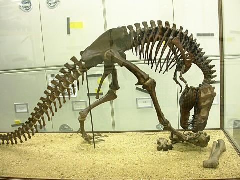 AMNH T rex skeleton model