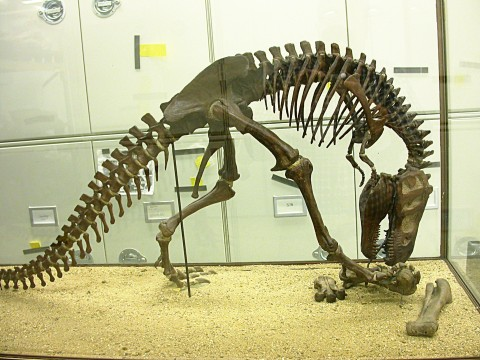 AMNH T rex skeleton model
