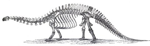 Marsh's second attempt at reconstructing the skeleton of Brontosaurus, based primary on the holotype YPM 1980, using a skull based on the Felch Quarry specimen. From Marsh (1891:plate XVI)