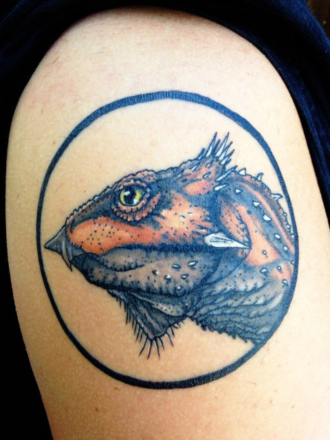Aquilops tattoo