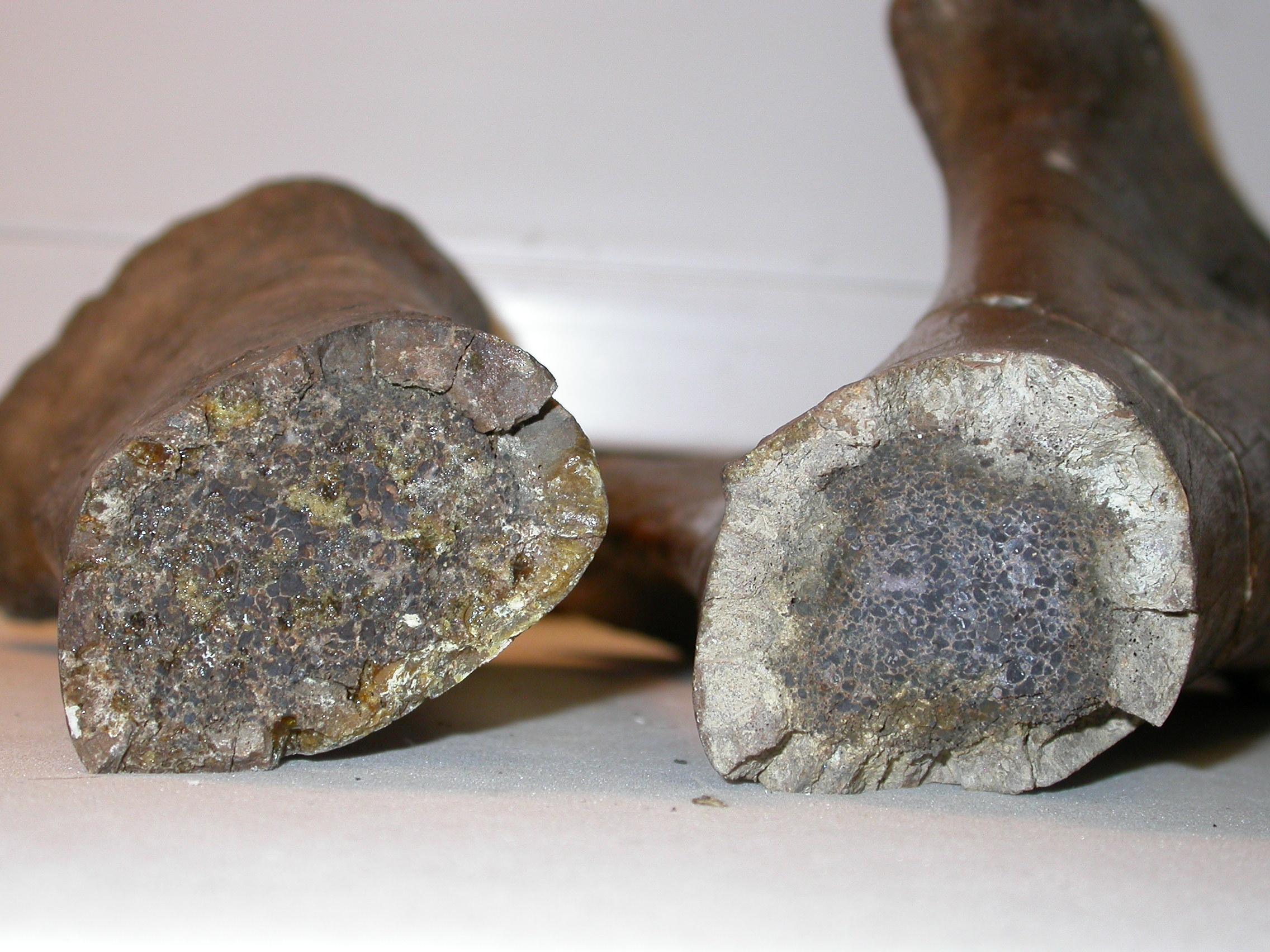 Breakage in bones of the lower left forelimb of