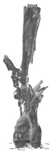 rebbachisaur-dorsal-rotation