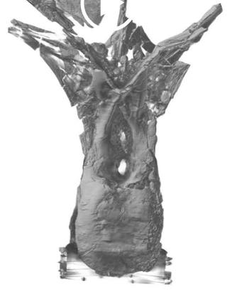 rebbachisaur-dorsal-rotation2