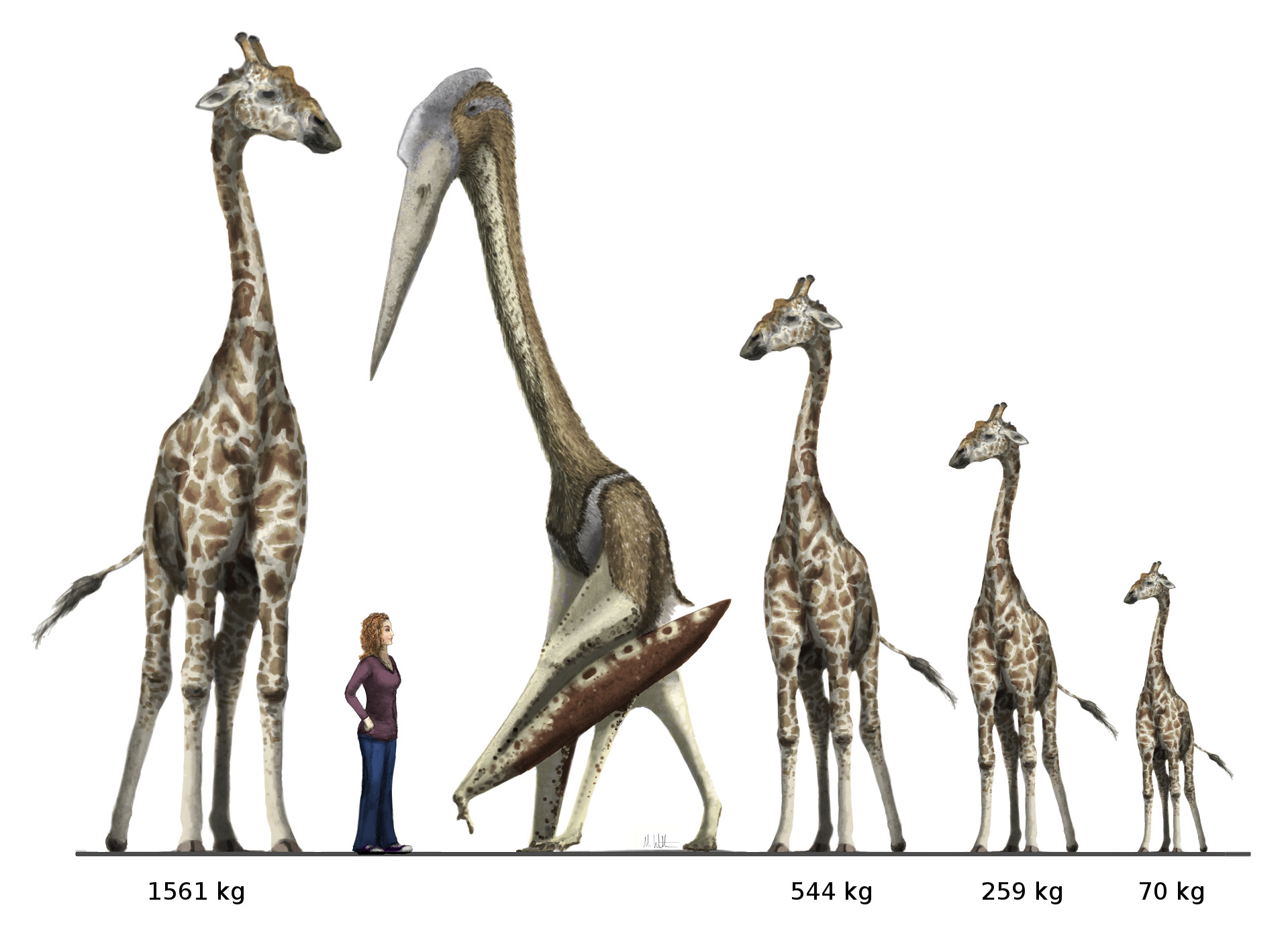 Arambourgiania vs giraffe vs the Disacknowledgement redux Witton ver 2 low res