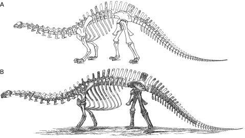 Taylor (2010: fig. 4). Marsh's reconstructions of Brontosaurus. Top: first reconstruction, modified from Marsh (1883, plate I). Bottom: second reconstruction, modified from Marsh (1891, plate XVI).