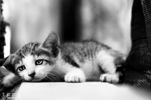 sadness_____by_aoao2-d430zrm