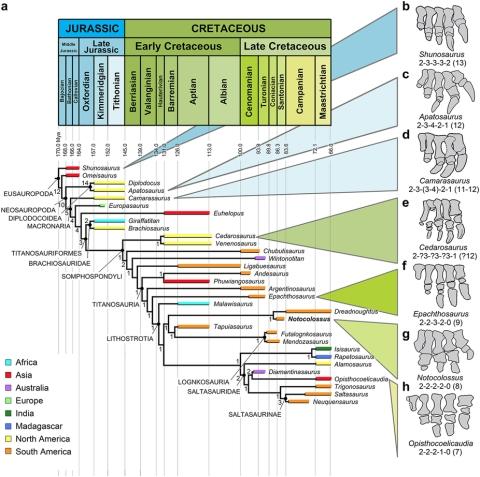 Notocolossus phylogeny - Gonzalez Riga et al 2016 fig 5