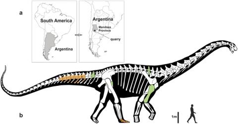 Notocolossus skeletal recon - Gonzalez Riga et al 2016 fig 1