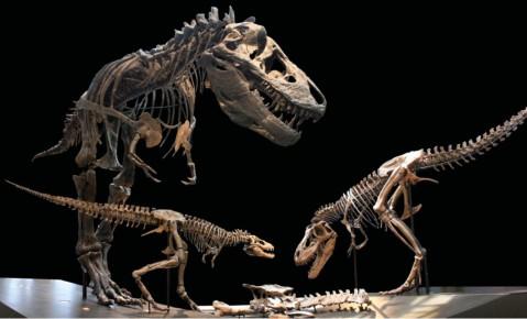 LACM Tyrannosaurus trio - Hone et al 2016 fig 1