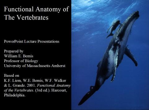 Liem et al 2001 PPTs - intro slide