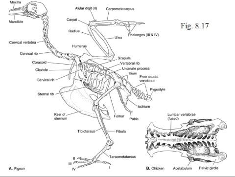 Aiiiieeee - a theropod! Aim for its head!