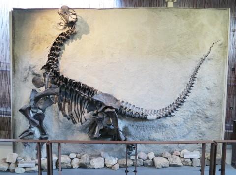 DNM baby Camarasaurus