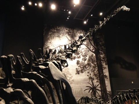 UMNH Barosaurus mount