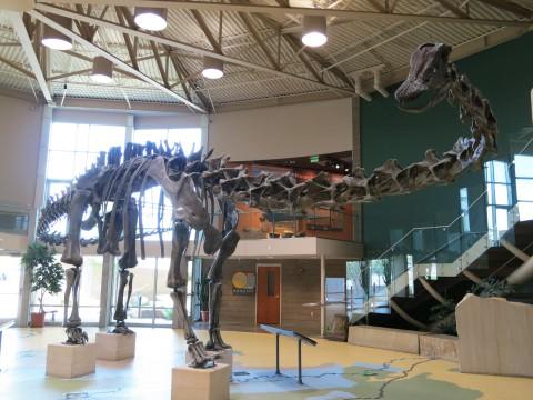 Utah Field House Diplodocus 1