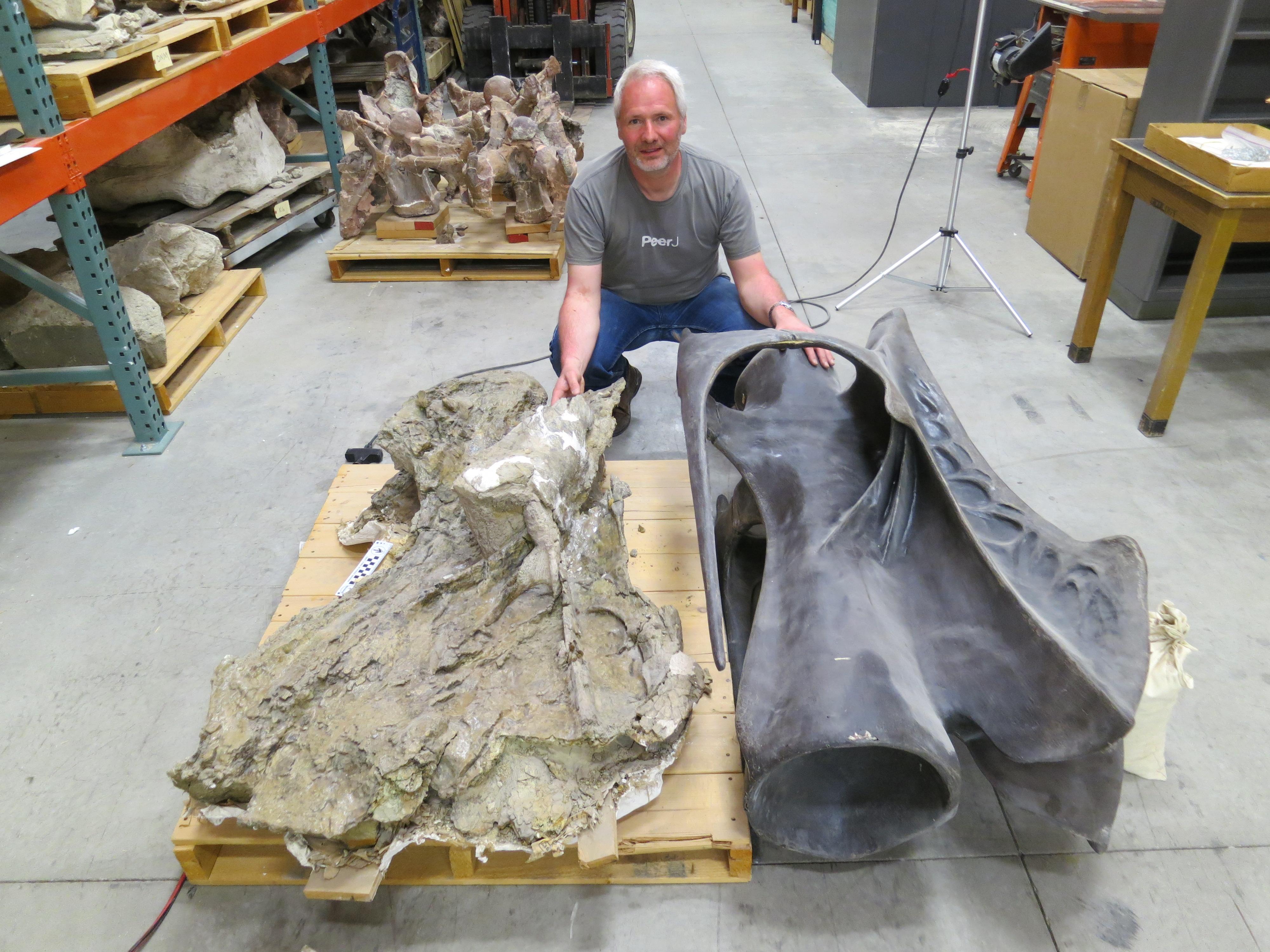 BYU Museum of Paleontology | Sauropod Vertebra Picture of the Week