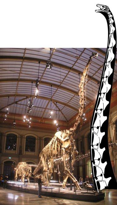 https://svpow.files.wordpress.com/2016/09/naturkundemuseum_brachiosaurus_brancai-with-supersaurus-neck.jpeg?resize=378%2C659