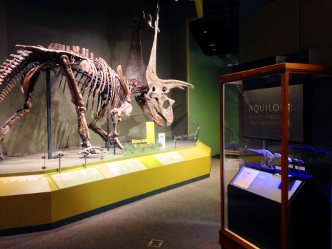 ceratopsians-large-and-small-omnh-dec-2016-3