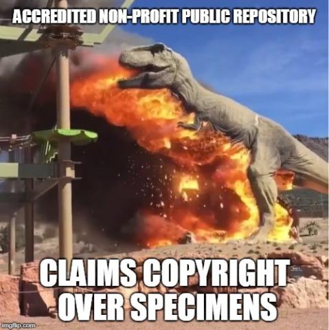 Dinosaur Search Results Sauropod Vertebra Picture Of The Week