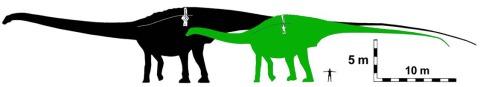 carpenter2018-amphicoelias-fragillimus-is-maraapunisaurus-fig7.jpeg?w=480&h=87