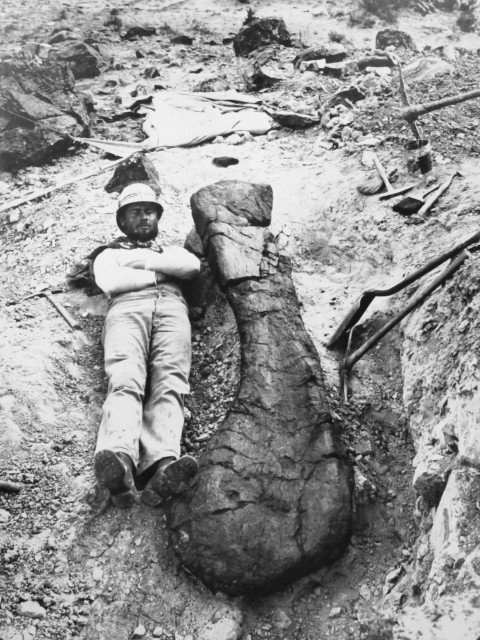 brachiosaurus-holotype-humerus-in-the-field.jpg?w=480&h=640